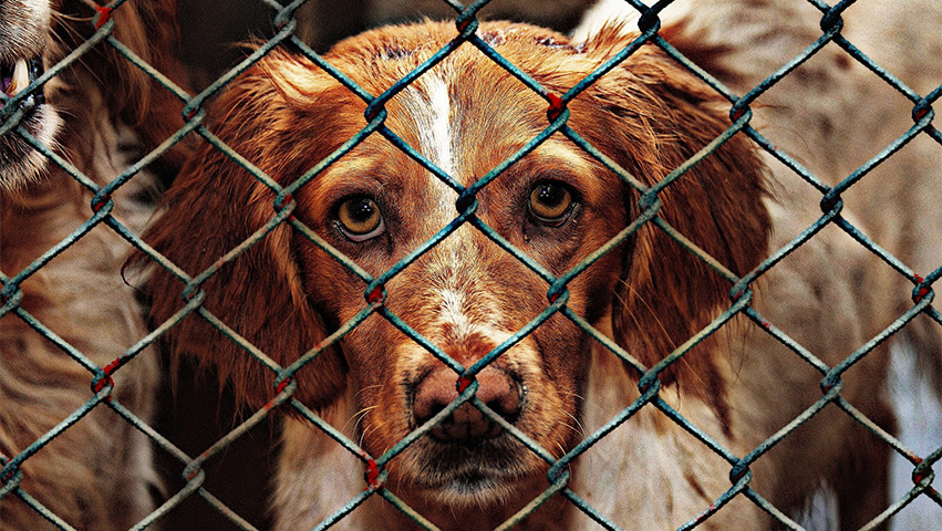 animalshelter - Both Eyes Open: Why Dog Shelters Need Your Help