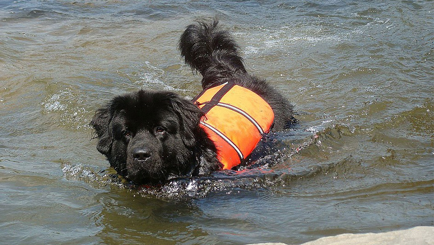 dog on water - What's in It for You: Three Benefits of Rescuing a Dog