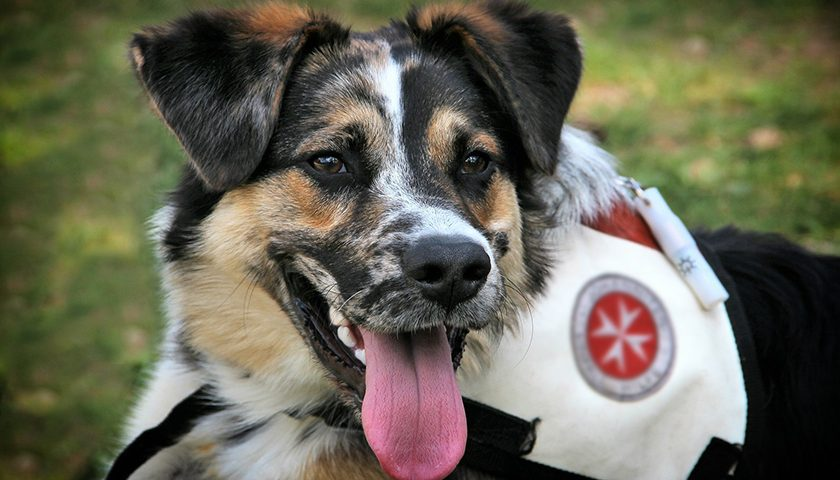 rescue 840x480 - What's in It for You: Three Benefits of Rescuing a Dog