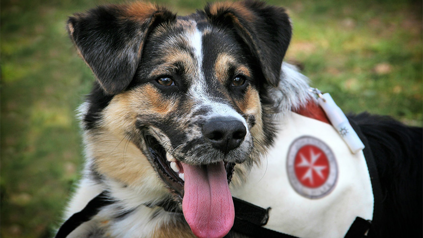 rescue - What's in It for You: Three Benefits of Rescuing a Dog